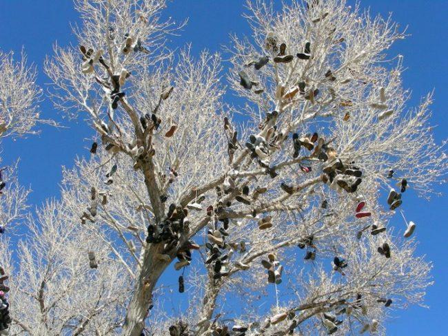Nevada's Shoe Tree