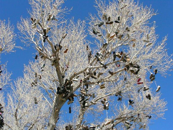 Tree Shoes Nevada Nevada's Shoe Tree