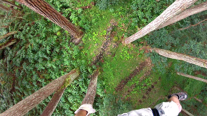 ziplining at Kohala Zipline