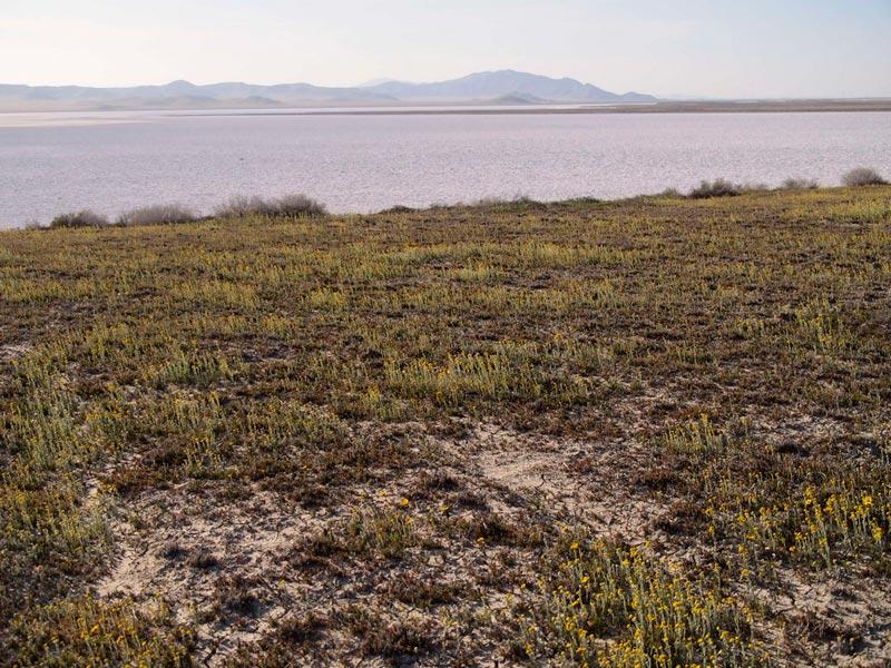 Carizzo National Monument Soda Lake